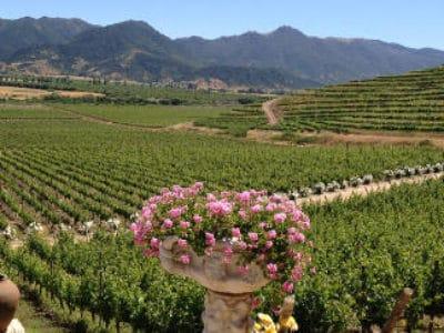 Santa Cruz Winery