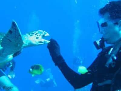 5. From Underwater.