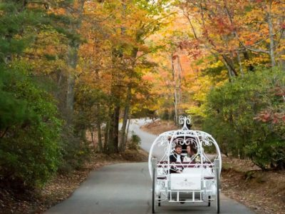 white wedding carriage in forest during fall with leaves changing color