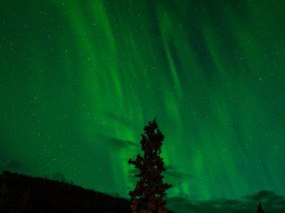 Denali National Park - Denali, Alaska